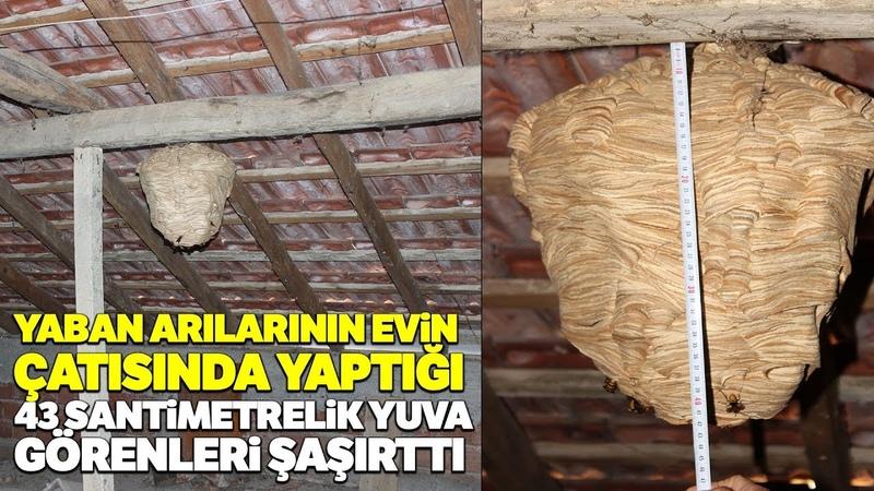 Yaban Arıları Evin Çatısına Yuva Yapı, Görenler Hayrete Düştü