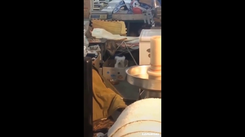 CUTE DOG IN BOX DANCES TO JUMP AROUND HOUSE OF PAIN HIP HOP RAP DJ MUGGS