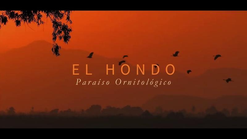 EL HONDO Paraíso Ornitológico Elx