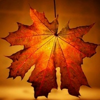 Фотография Autumn Dream ВКонтакте