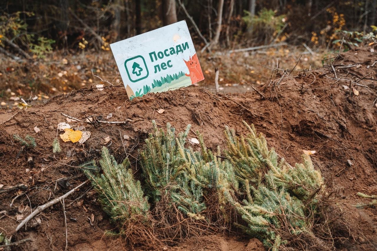 🍁🍂В рамках ежегодной осенней акции всероссийского проекта Посади Лес в Можгинском районе планируется посадка 10 тысяч елей.
