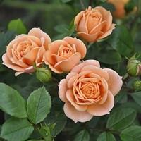 Зиатдинова Роза