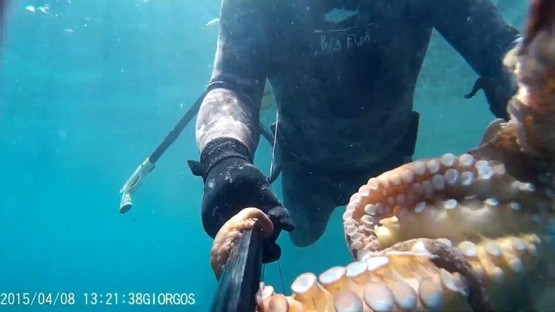 Υποβρύχιο ψάρεμα Ελλάδα χταπόδι 8kg Spearfishing Greece octopus 8kg