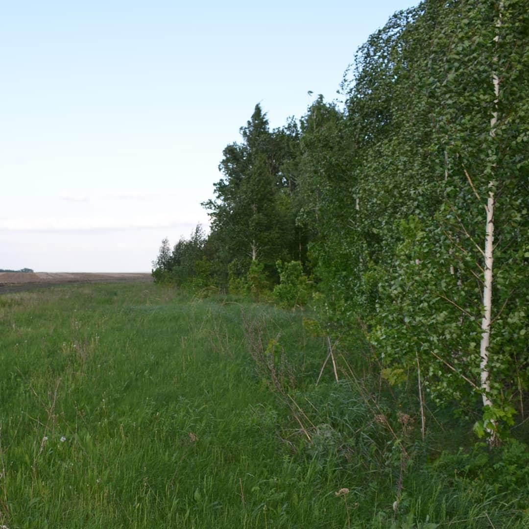Сегодня ночью в лесу в районе посёлка Студёный искали пропавшего пожилого человека