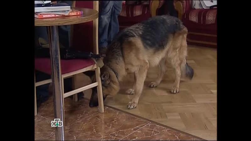 Возвращение Мухтара 2 (2009) 5 сезон 88 серия
