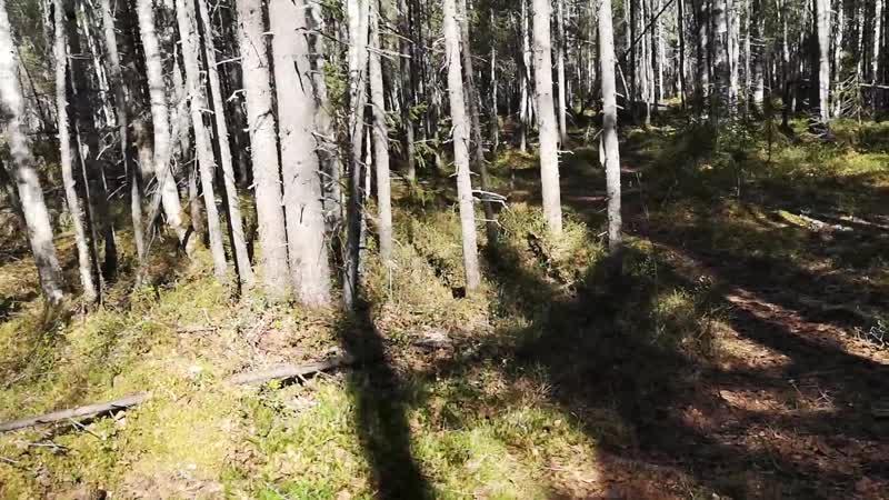 Лесной отрыв-1
