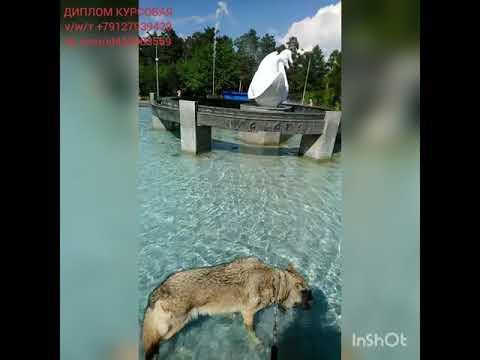 ВолкВоланд купается в фонтане ДИПЛОМ КУРСОВАЯ тvw 79127939429 vk.comid420983559