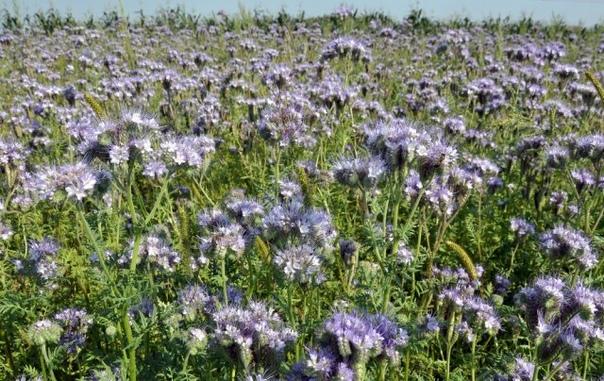 5 способов превратить заросший дерном участок в образцовый огород.