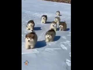 Так вот вы какие, северные олени!!