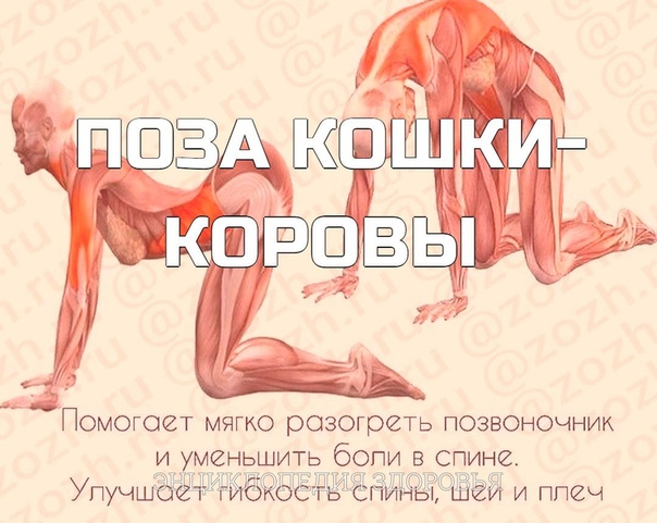 ПОЗА КОШКИ-КОРОВЫ