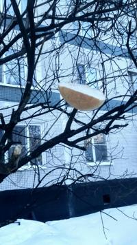 хлеб на дереве