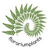 Florariumplants флорариум, палюдариум, аквариум
