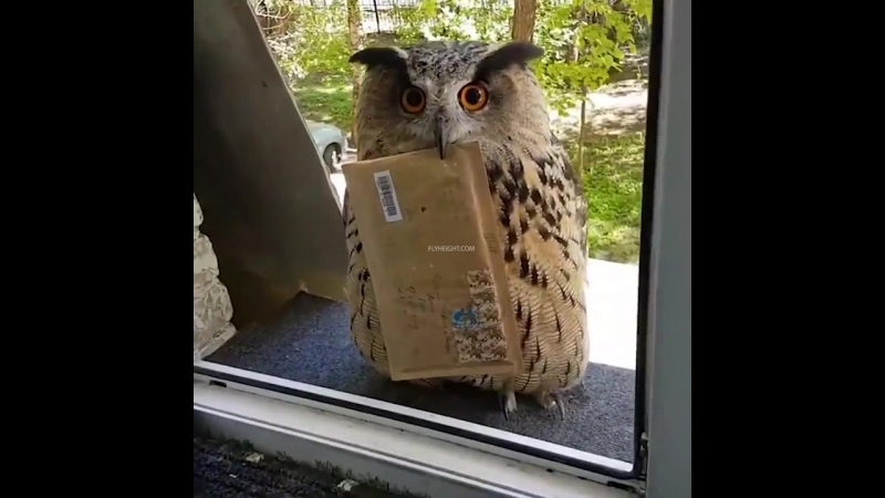 Honey, looks like we have a new mailman.