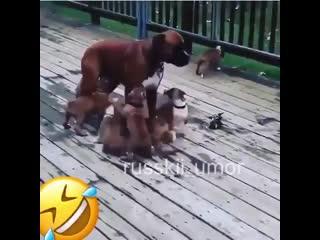 не мама