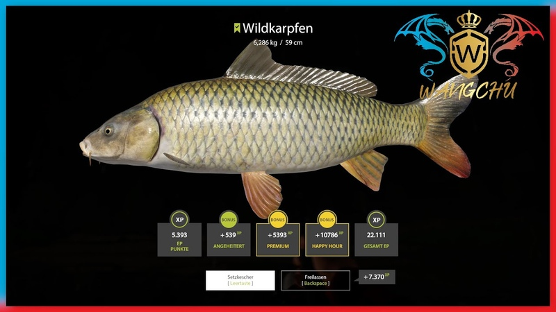 RF4 53 Fluss Sura Wildkarpfen Deutsch Russian Fishing 4 Wangchu