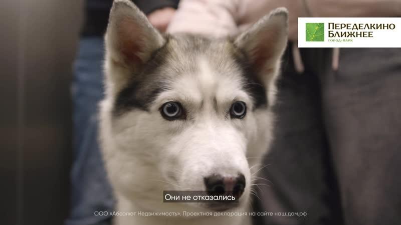 Город парк Переделкино Ближнее Пёс который всех подружил