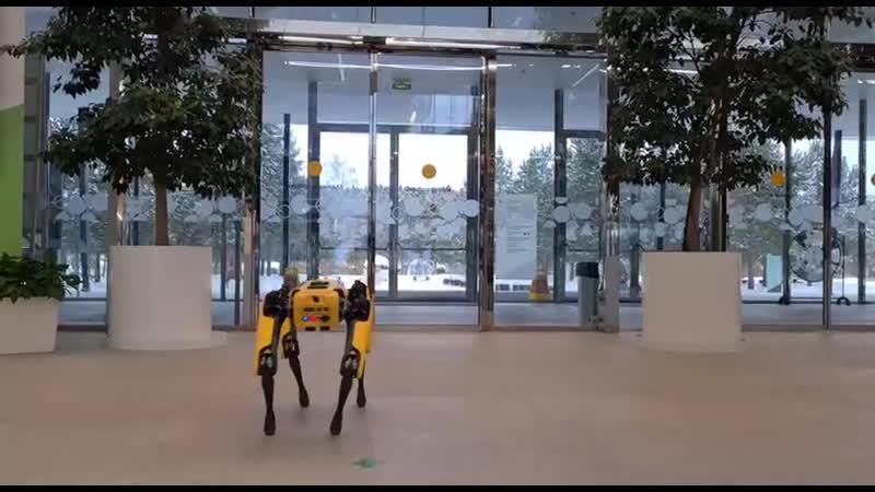 Робопес от Boston Dynamics впервые появился в России его купил Сбер
