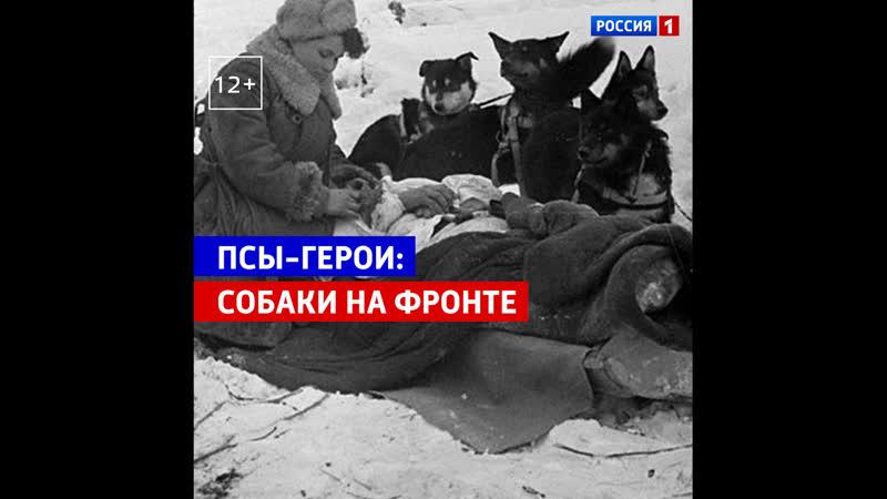 Подвиг собаки диверсанта Дины Россия 1