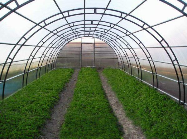 Плохой грунт в теплице. Как распознать и что делать Конечно же, теплицы предусмотрены для того, чтобы выращивать в них растения, которые наиболее придирчивы к среде, в которой они обитают. Чаще