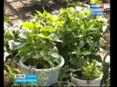 Оранжерею тропических растений восстанавливают ученые СИФИБРА. Зимой уникальная коллекция погибла из-за морозов