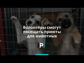 Волонтёры вновь могут посещать приюты для животных
