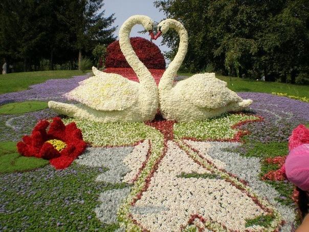 Прекрасные лебеди из цветов