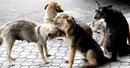 Бродячие собаки не падают с небес. Они результат лени, равнодушия и