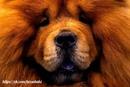 Среднестатистическая собака - гораздо более симпатичное существо…