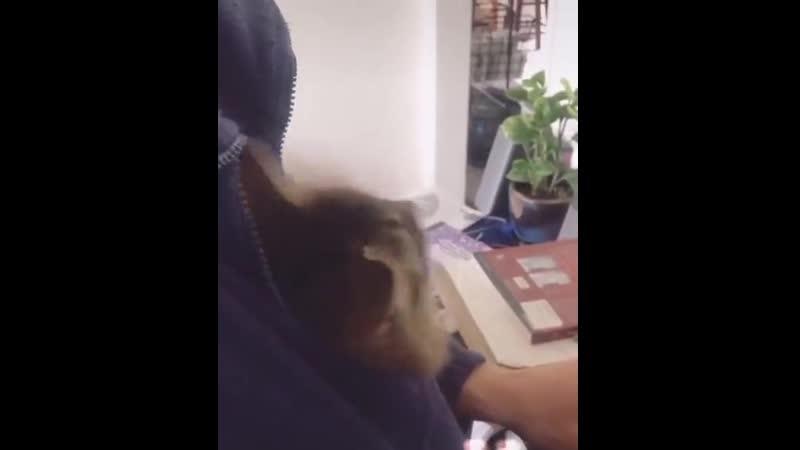 Awww it's a baby kangarоо